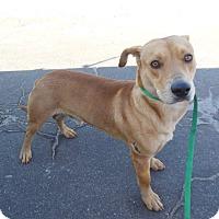 Adopt A Pet :: Ramone - Sugar Grove, IL