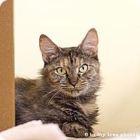 Adopt A Pet :: Missy - Island Park, NY