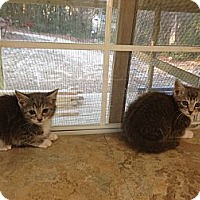 Adopt A Pet :: Tom & Jerry - Aiken, SC
