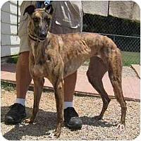 Adopt A Pet :: Kaboom - Oak Ridge, NC
