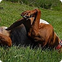 Adopt A Pet :: Tanner - Bakersville, NC