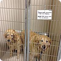 Adopt A Pet :: Louise - Denver, CO