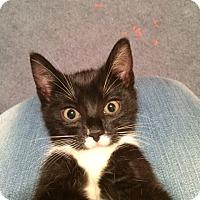 Adopt A Pet :: Flicker (LE) - Little Falls, NJ