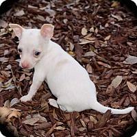 Adopt A Pet :: Raindrop - La Habra Heights, CA