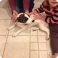 Adopt A Pet :: Betty - North Brunswick, NJ
