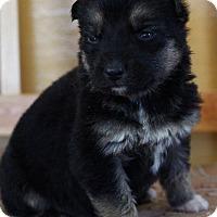 Adopt A Pet :: HILTI - Winnipeg, MB