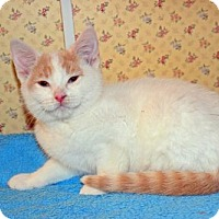 Adopt A Pet :: Ryan - Buford, GA