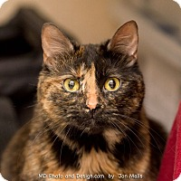 Adopt A Pet :: Rory - Fountain Hills, AZ