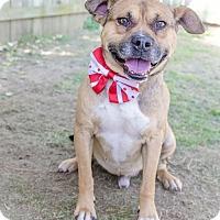 Adopt A Pet :: Tater - Darlington, SC