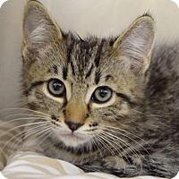 Adopt A Pet :: Berlioz - Dublin, CA