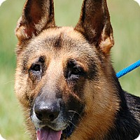 Adopt A Pet :: Archie - Preston, CT