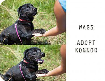 Labrador Retriever Mix Dog for adoption in Wagoner, Oklahoma - Connor