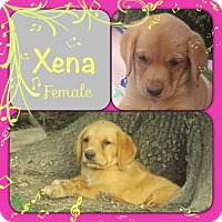 Adopt A Pet :: Xena-pending adoption - Manchester, CT