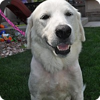 Adopt A Pet :: Rosenberg - Broomfield, CO