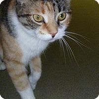 Adopt A Pet :: Dallas - Hamburg, NY