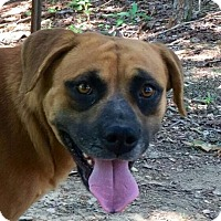 Adopt A Pet :: Maggie - Hagerstown, MD