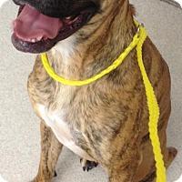 Adopt A Pet :: Axl - Spokane, WA