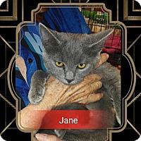 Adopt A Pet :: Jane - San Bernardino, CA