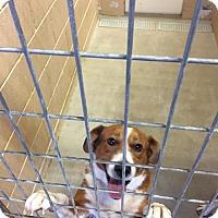 Adopt A Pet :: Gage - New Braunfels, TX