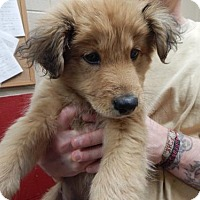 Adopt A Pet :: Bobby - Pikeville, KY
