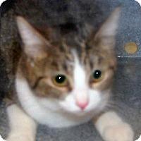 Adopt A Pet :: Felicia - Wildomar, CA