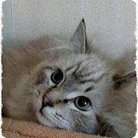 Adopt A Pet :: a2 - Pueblo West, CO
