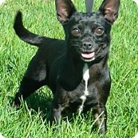 Adopt A Pet :: Morgan - Columbus, NE
