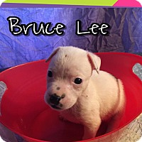 Adopt A Pet :: Bruce Lee - Cat Spring, TX