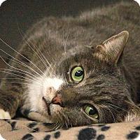 Adopt A Pet :: Butch - New York, NY