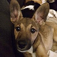 Adopt A Pet :: Marley - Fair Oaks Ranch, TX
