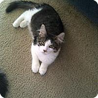 Adopt A Pet :: Baby - San Ramon, CA