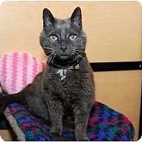 Adopt A Pet :: Sheba - Farmingdale, NY