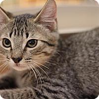Adopt A Pet :: Marcus - Sacramento, CA