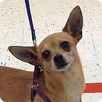 Adopt A Pet :: Papi - Corona, CA