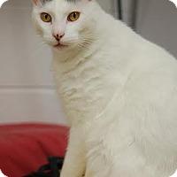 Adopt A Pet :: Morgan - DFW Metroplex, TX