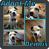 Adopt A Pet :: Dennis - Cheney, KS