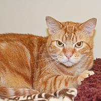 Adopt A Pet :: Clark - Lincoln, NE