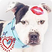 Adopt A Pet :: Bubba - Sacramento, CA