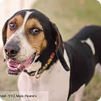 Adopt A Pet :: Eastwood - Sherman, CT