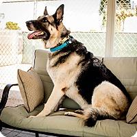 Adopt A Pet :: Riese - Phoenix, AZ