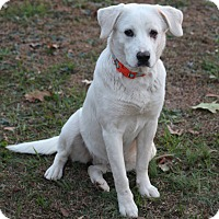 Adopt A Pet :: Murphie - Huntsville, AL