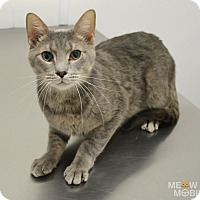 Adopt A Pet :: Clay - Springfield, IL