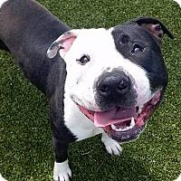 Adopt A Pet :: Percy - Mayer, MN