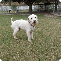 Adopt A Pet :: Sampson - Clermont, FL