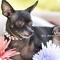Adopt A Pet :: MIAMORE - Inland Empire, CA