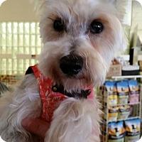 Adopt A Pet :: Barry - Ft. Lauderdale, FL