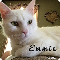 Domestic Shorthair Cat for adoption in Hagerstown, Maryland - Emmie