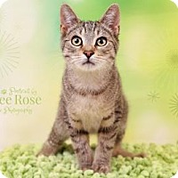 Adopt A Pet :: Southfield - Sterling Heights, MI