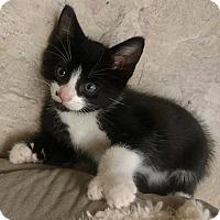 Adopt A Pet :: Punjab - Bruce Township, MI