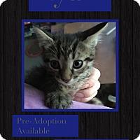 Adopt A Pet :: Ryan - CLEVELAND, OH